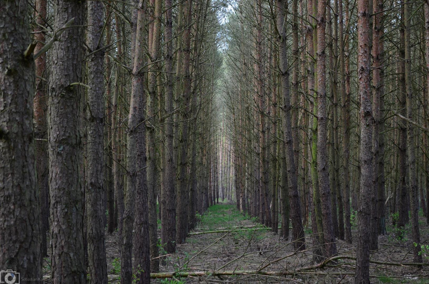 Mroczny las - Sebastian Kardziejonek Portfolio